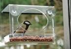 vogelhuisje tegen het raam