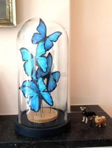 vlinders in een stolp diy