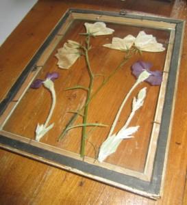 bloemen drogen en inlijsten