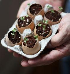 tuinkers in eierschaal