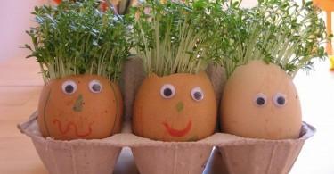 plantje in eierschaal